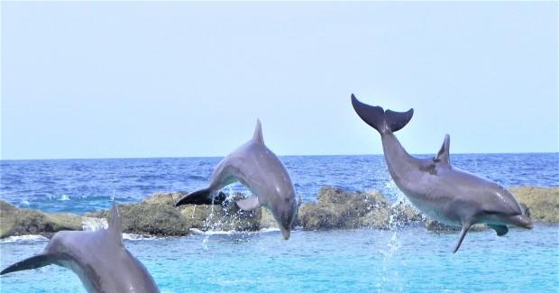 Dolfijn Academie