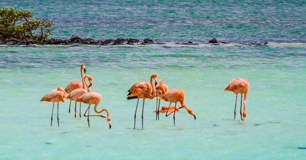 Spot Bonaire's Pink Flamingos
