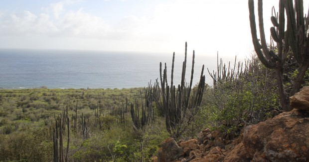 Take a Tour of Bonaire's Dry Forest